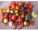 Tomate mélange variétées anciennes